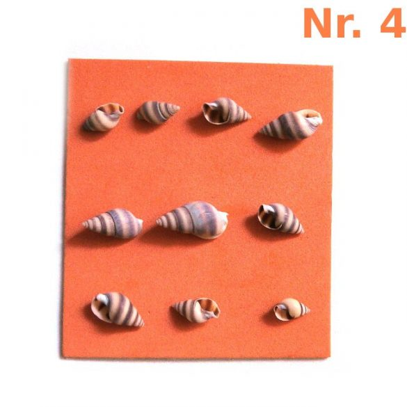 Snail houses for decoration